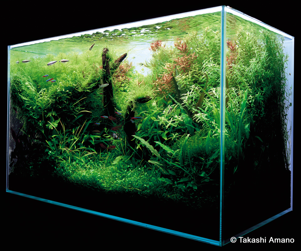 A Path To The Finished Aquarium By Takashi Amano