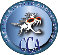 Capital Cichlid Association