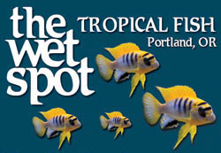 The Wet Spot Tropical Fish